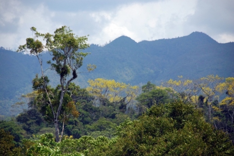 Global Forest Coalition on REDD+: Has it been worth the money?
