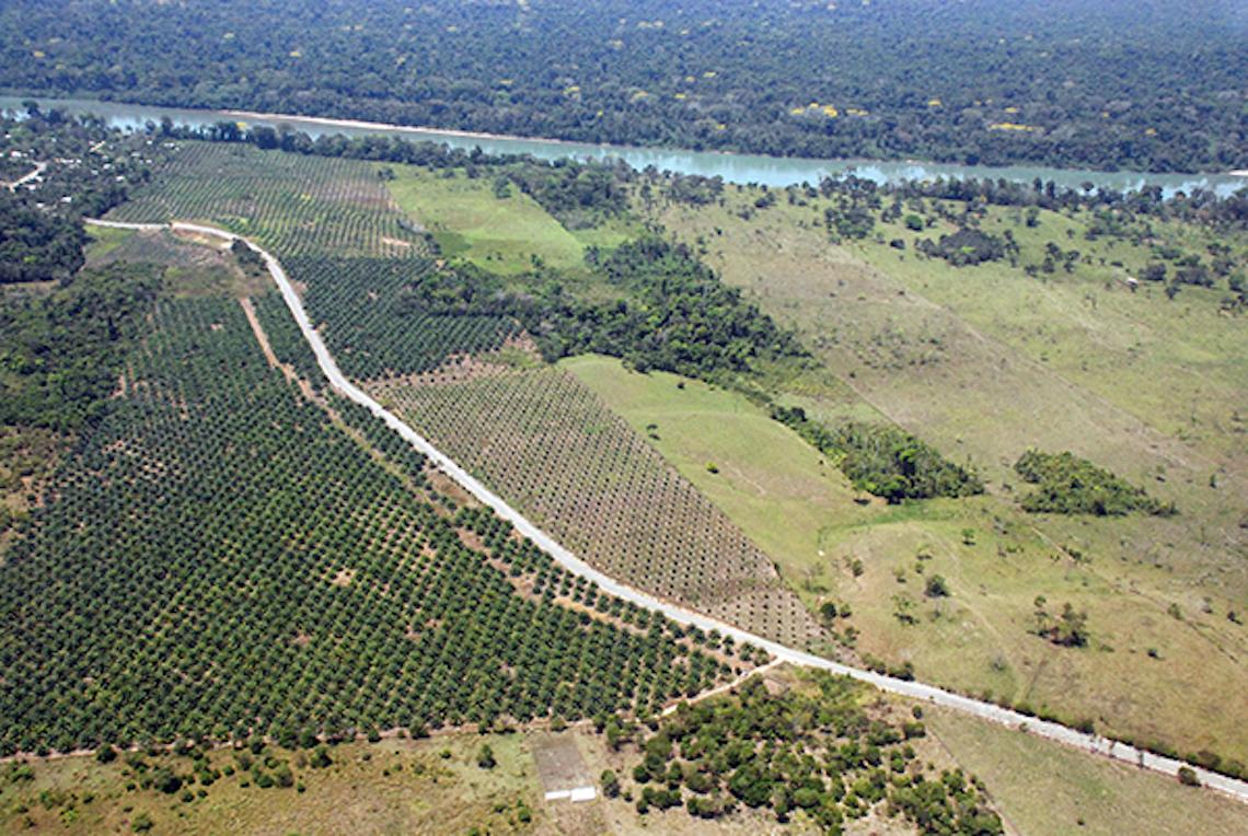 "World Rainforest Movement: Dangerous Impacts of ""Zero Deforestation"""