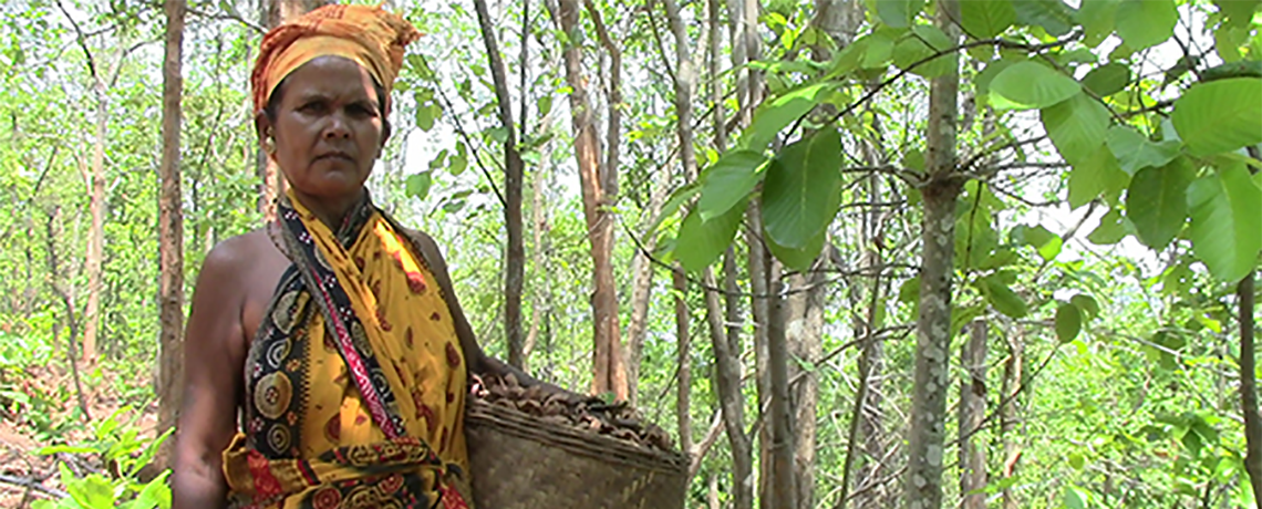 India: Plantations Uproot Women From Customary Forests