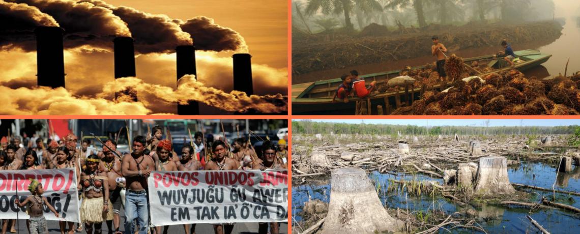 EARTH WATCH RADIO: Rachel Smolker On Biofuels & Their Environmental Impact