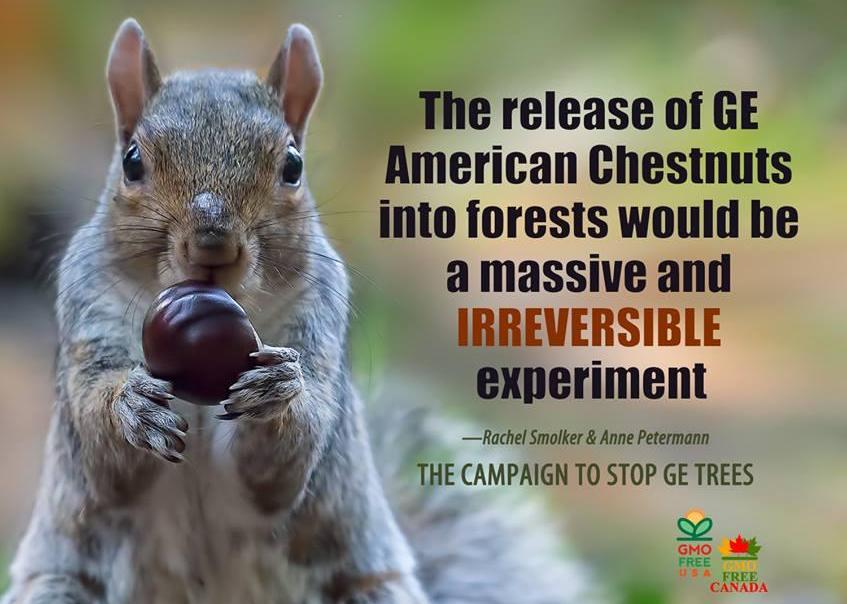 Sign On to Stop the Unregulated Release of Genetically Engineered Trees into Forests!