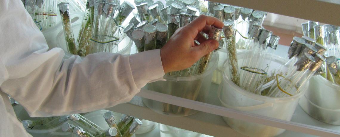 USDA Seeks Comment on Biotechnology Regulation Revisions