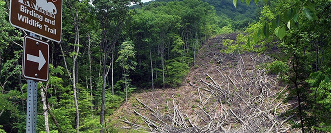 Atlantic Coast Pipeline Already Destroying Forests