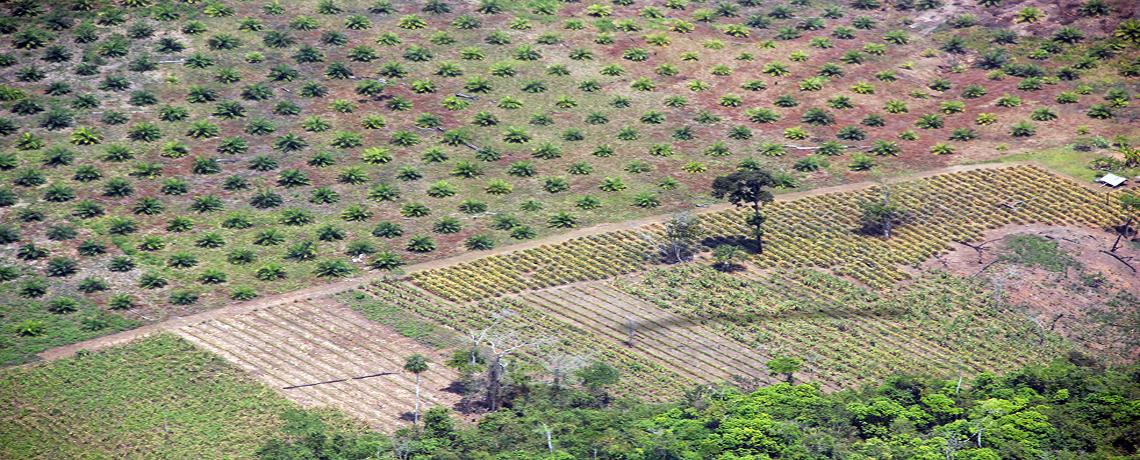 International Environmental and Human Rights Group Wins Major Grant