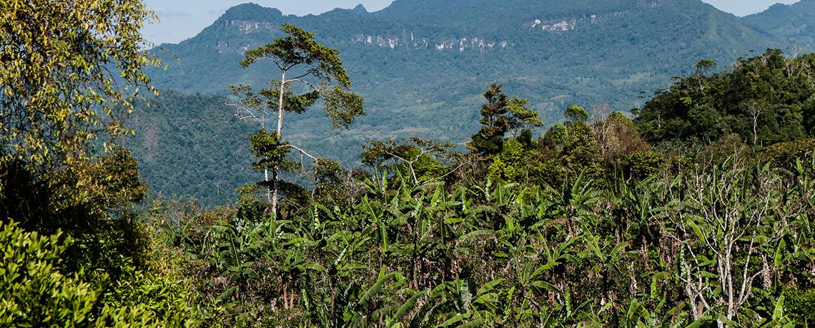 NYT: Nicaragua Dispute Over Indigenous Land Erupts in Wave of Killing