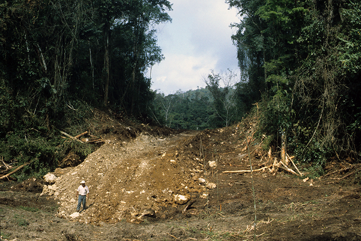 Daily Maverick: COVID-19 = Capitalism + Ecological Destruction