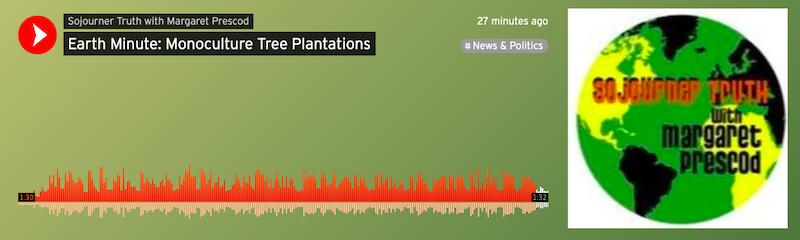 Earth Minute: Monoculture Tree Plantations