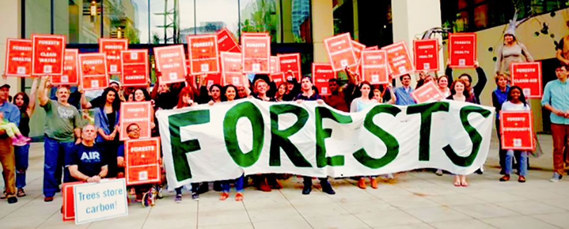 Why Are US Southern Forests Being Used To Fuel European Power Plants?