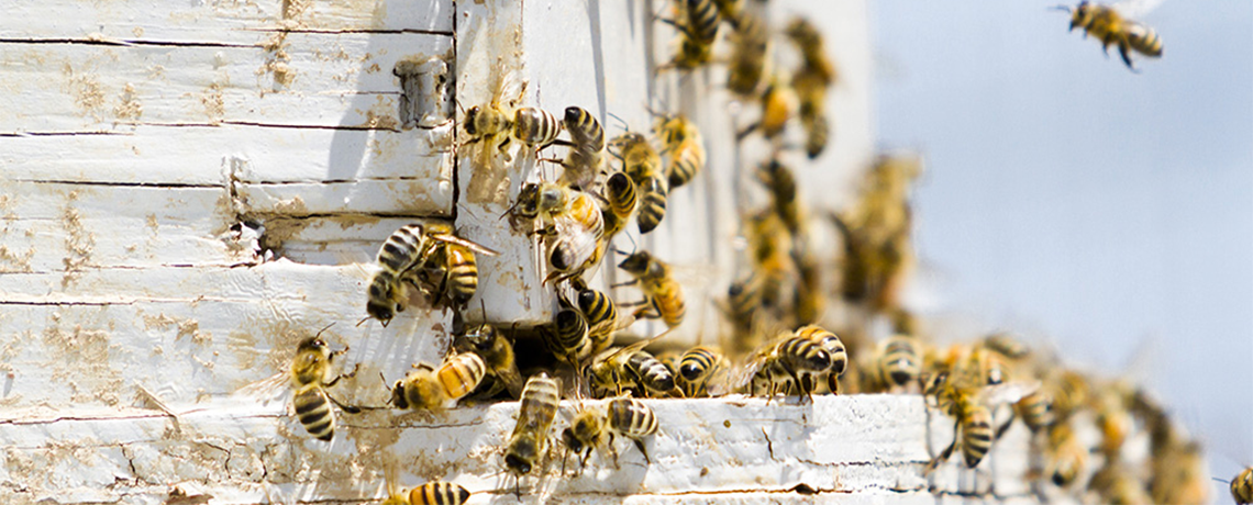 219,210 Americans Call on EPA to Ban Bee-Killing Pesticides