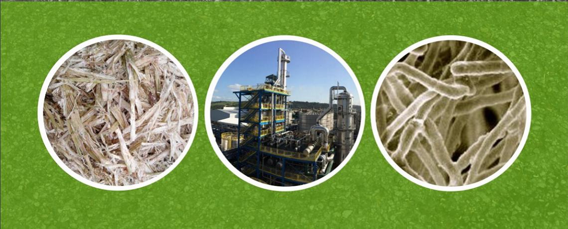 Dead End Road: The False Promises of Biofuels