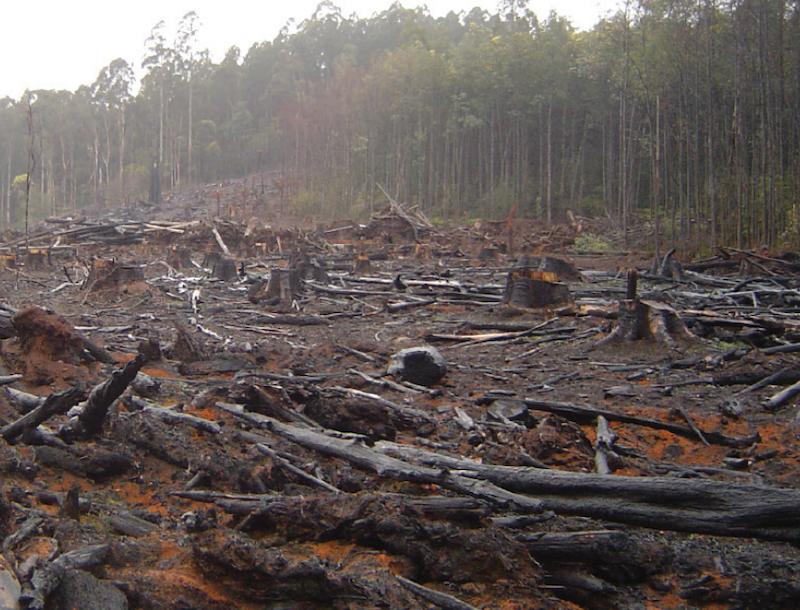 Exposing Net Zero greenwash: New report details Big Polluters' next Big Con