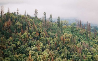 Earth Watch: Tom Goldtooth On Keystone XL & Biden's Environmental Policies