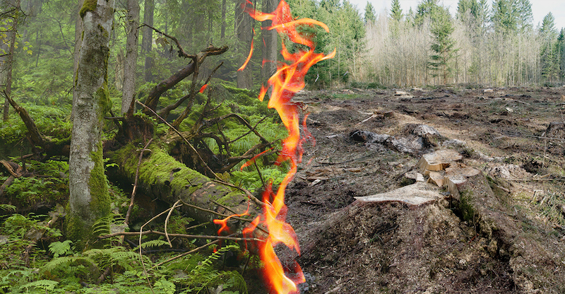 Earth Watch: Rachel Smolker On The International Day Of Action On Forest Biomass