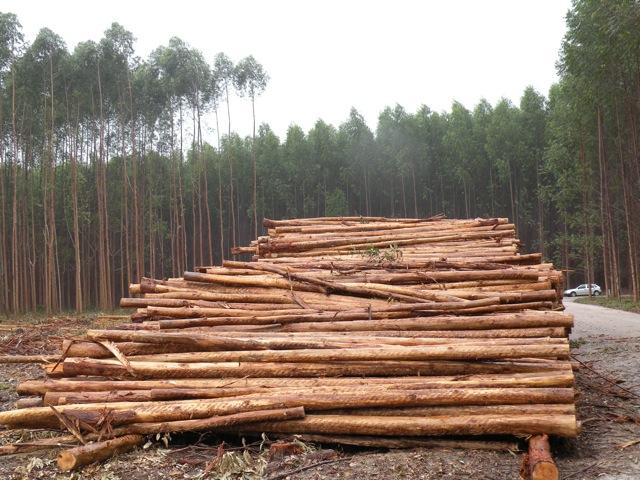 Rising Deforestation Threatens Brazil's Amazon
