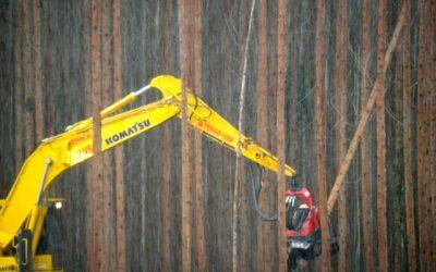 2021 International Day Against Monoculture Tree Plantations