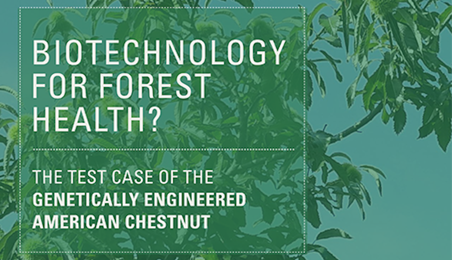 Major New White Paper on GE American Chestnut Published